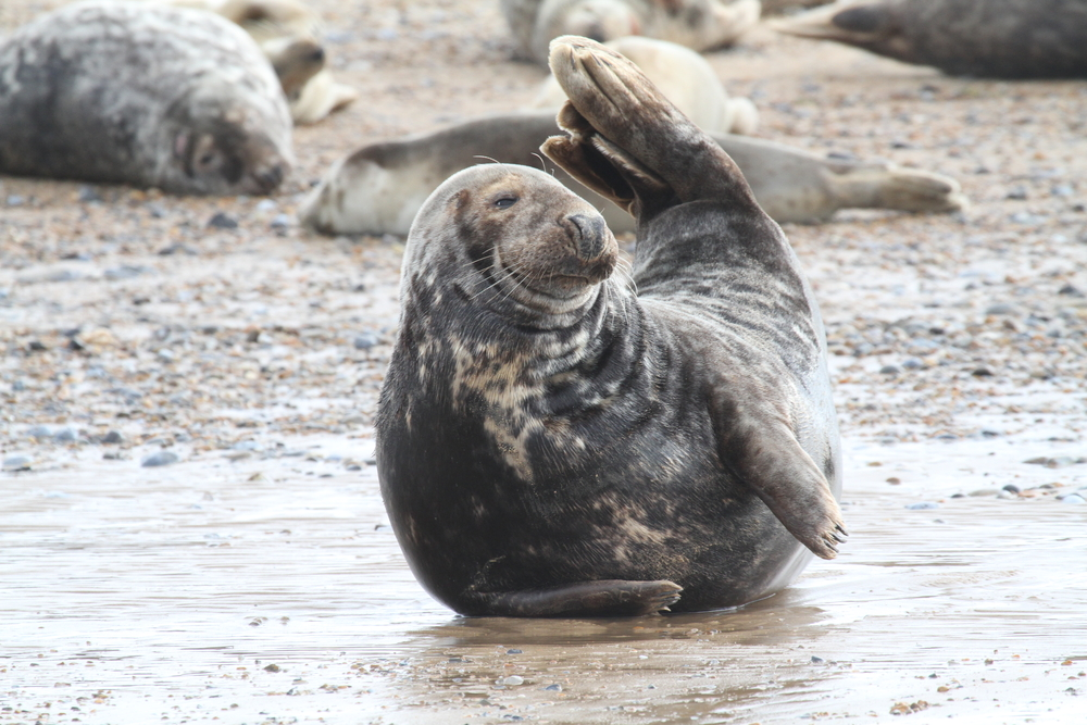 Best Big Dogs >> See the seals | Experience Norfolk