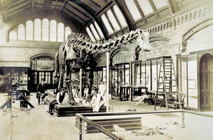 The Diplodocus exhibit at the Natural History Museum, London. (photo: Carnegie Museum of Natural History)