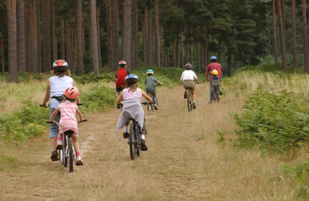 Family cycling in Thetford Forest