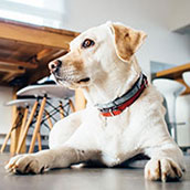 Dog friendly holiday cottages in Norfolk