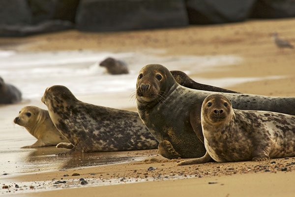 Visit the seals along the Norfolk coastline