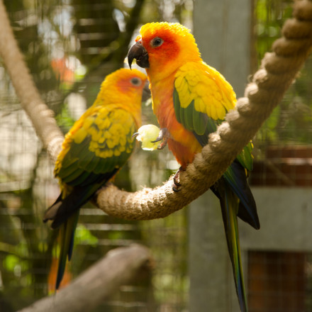 Parrots at Banham Zoo, Norfolk