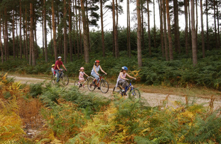 Family cycling at Thetford Forest, Norfolk
